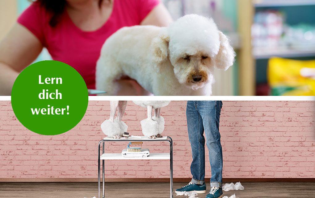 Lern dich weiter: Hundefriseurin werden