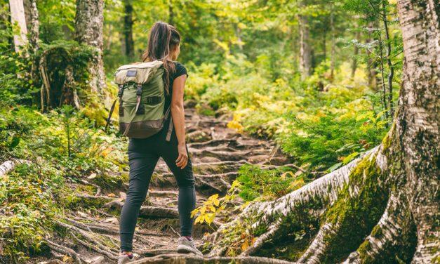 Der Wald als Gesundheitsraum und Klassenzimmer